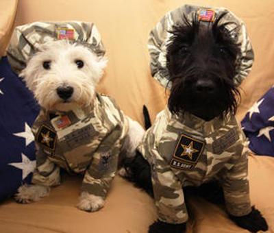 Westie La S Top 10 Pet Costumes Featuring Westies